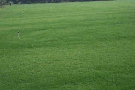 武汉马尼拉草坪的优点和缺点分别
