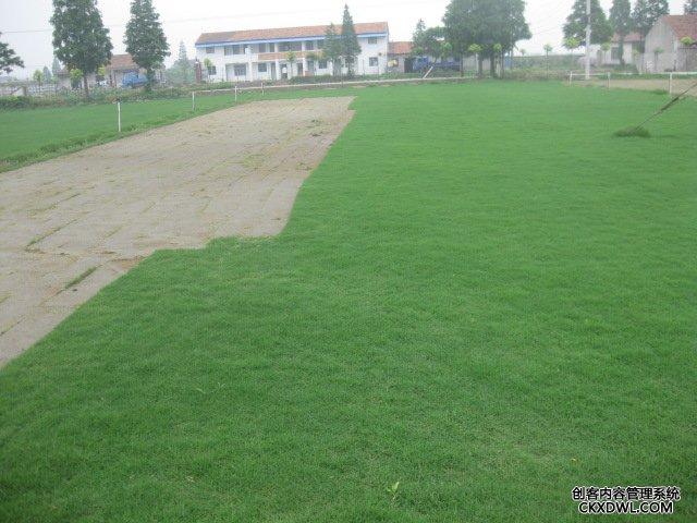 武汉绿化草坪的种植方案