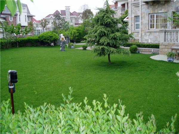 增加武汉绿化草坪使用寿命的方法